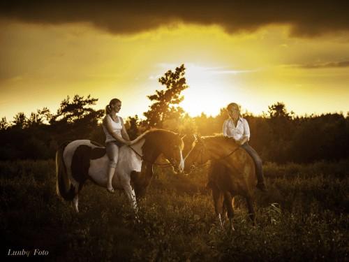 Kontakt dyrlæge Heidi Nielsen Birkesø heste af Lundby foto