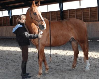alexanderteknik for heste