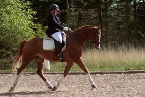 alexanderteknik til hest og rytter