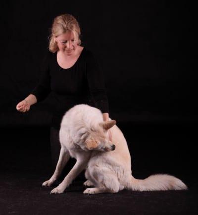 Behandling med alexanderteknik til hunde