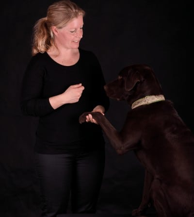 Fysioterapeutisk behandling af hunde