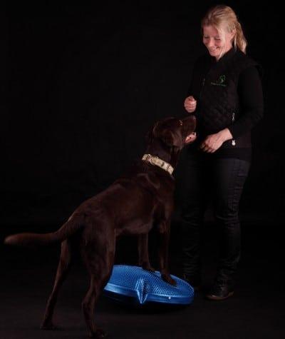 fysioterapi til hunde