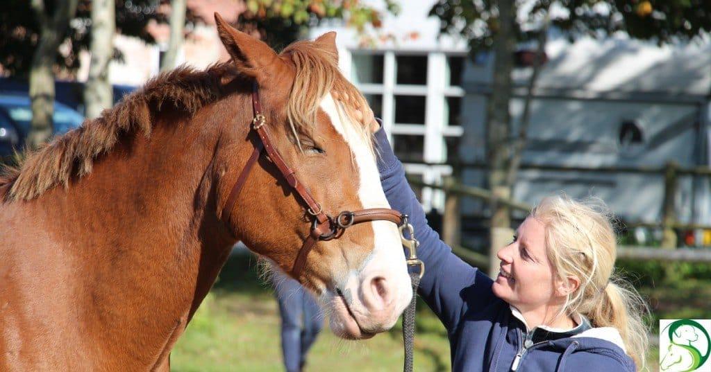 Kiropraktisk behandling af hesten og hvad så?