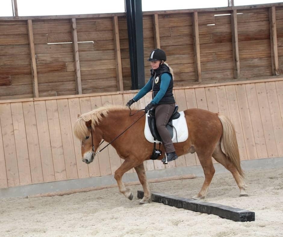Når hesten går pasgang og hvordan træning kan hjælpe dem til at skridte rent igen
