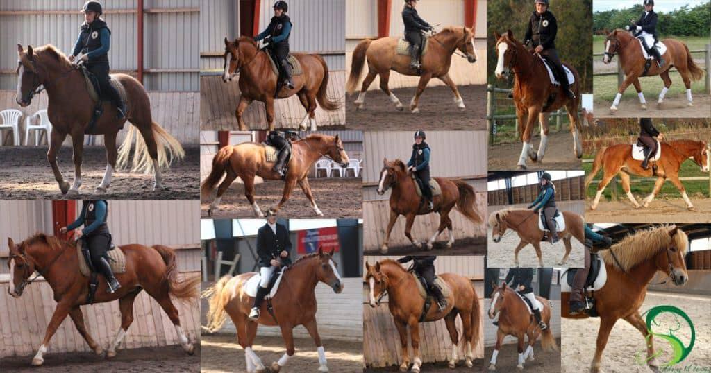 Hvilken holdning bør min hest gå i for at gå optimalt?