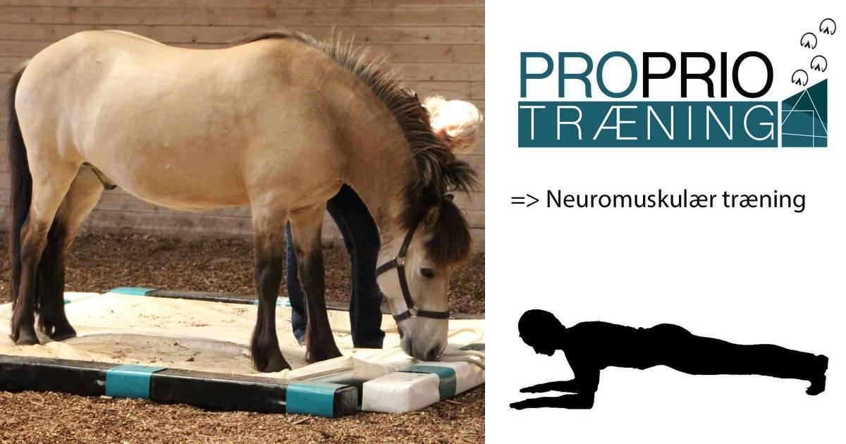 neuromuskulær træning
