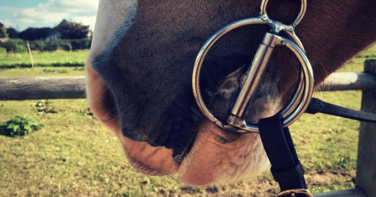 naar-hesten-skummer