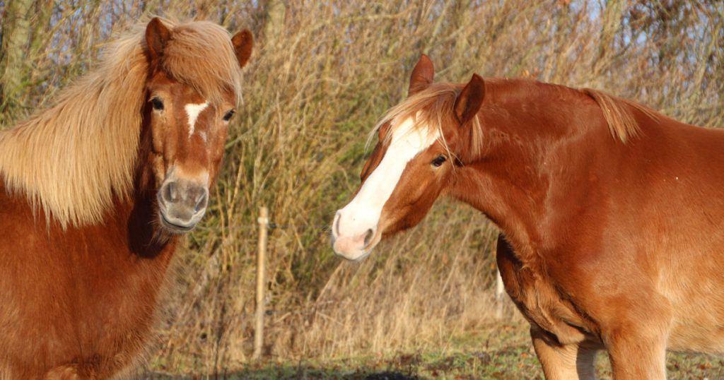 Tandbehandling af hesten og hvad så?