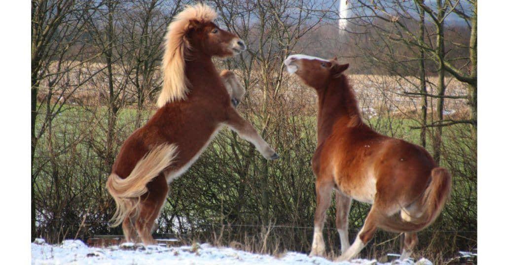 Luk din hest på fold – det er GRATIS træning