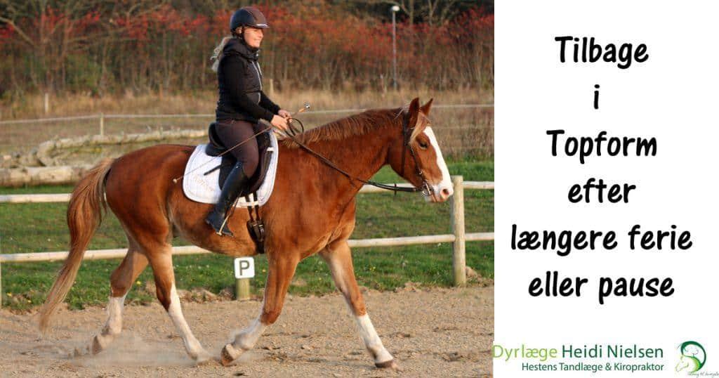 Sådan kan du få din hest tilbage i topform efter en længere pause