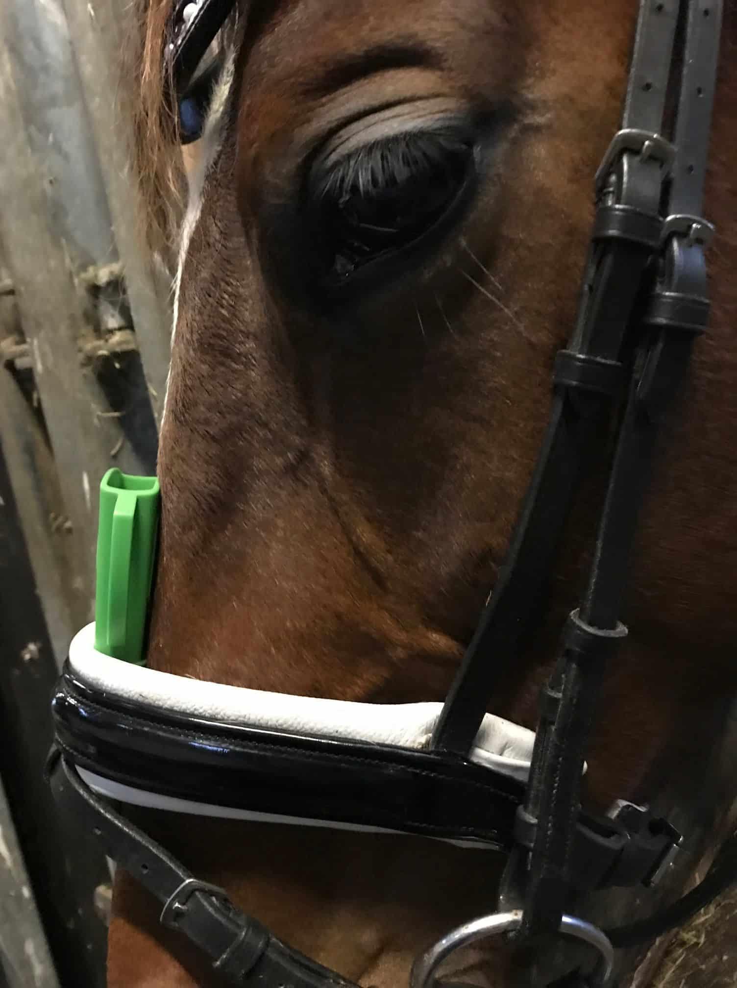 næsebånd hos heste