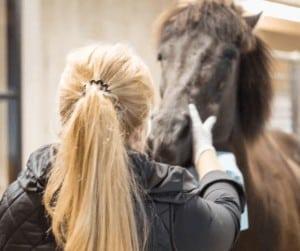 hestens taender