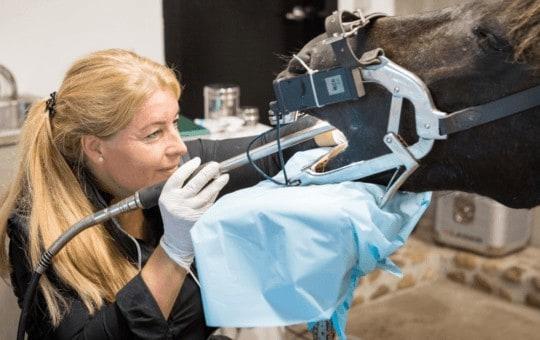 dyrlaege heidi nielsen tandbehandling hest