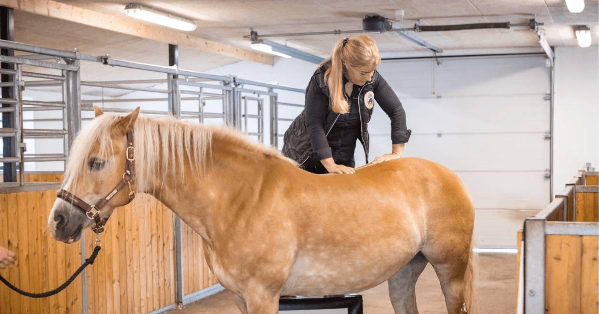kiropraktik og osteopati til heste